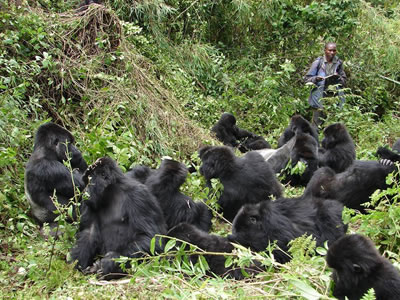 Gorilla Photo Tours Africa