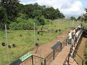 Ngamba Island Sanctuary