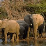 Wildlife Safaris in Africa