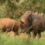 Ziwa Rhino Sanctuary