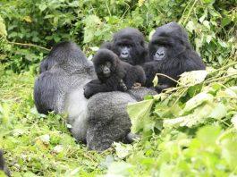 Eco Tours Rwanda