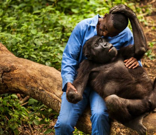 Sekenkwe Gorilla Center