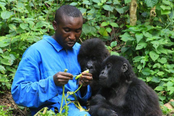 Safaris in Congo