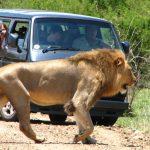respect wild animal