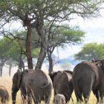 Kidepo Wildlife Safari
